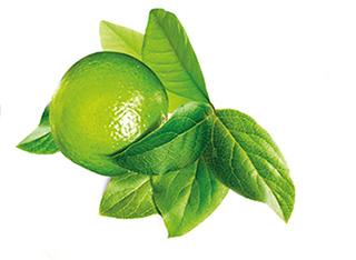 Lime - Source d'énergie